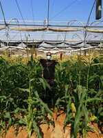 81 mahasiswa Indonesia belajar pertanian di Israel