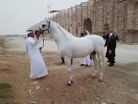 Peternakan Kuda Pangeran Qatar